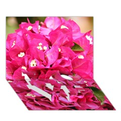Bougainvillea Love Bottom 3d Greeting Card (7x5)  by trendistuff