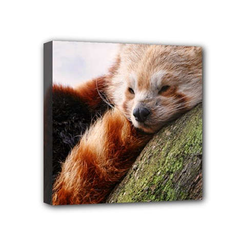 Red Panda Mini Canvas 4  X 4  by trendistuff