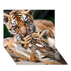 Baby Tigers Love Bottom 3d Greeting Card (7x5)