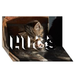 Talk To The Paw Hugs 3d Greeting Card (8x4)