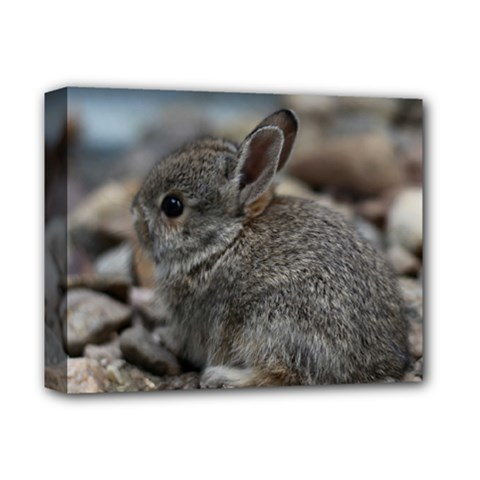 Small Baby Bunny Deluxe Canvas 14  X 11  by trendistuff