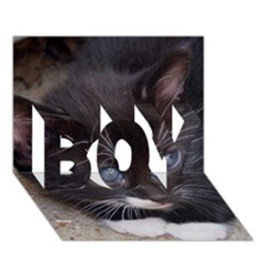 Kitty In A Corner Boy 3d Greeting Card (7x5) by trendistuff