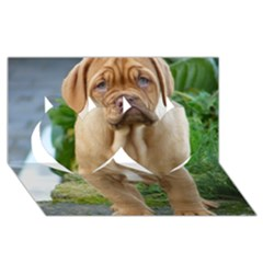 Cute Wrinkly Puppy Twin Hearts 3d Greeting Card (8x4)