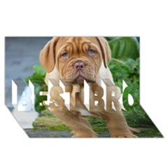 Cute Wrinkly Puppy Best Bro 3d Greeting Card (8x4)