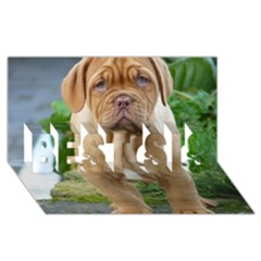 Cute Wrinkly Puppy Best Sis 3d Greeting Card (8x4)