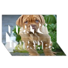 Cute Wrinkly Puppy Best Wish 3d Greeting Card (8x4)