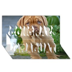 Cute Wrinkly Puppy Congrats Graduate 3d Greeting Card (8x4)