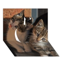 Cute Kitties Apple 3d Greeting Card (7x5)