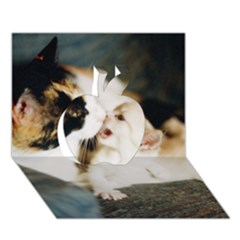 Calico Cat And White Kitty Apple 3d Greeting Card (7x5)