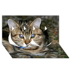 Blue Eyed Kitty Twin Hearts 3d Greeting Card (8x4)