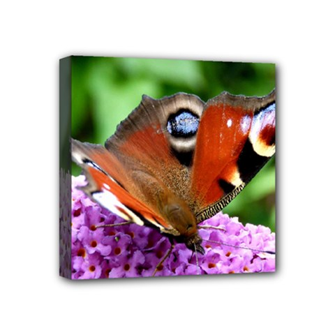 Peacock Butterfly Mini Canvas 4  X 4  by trendistuff