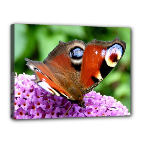 Peacock Butterfly Canvas 16  X 12  by trendistuff