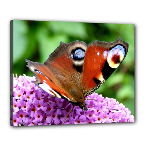 PEACOCK BUTTERFLY Canvas 20  x 16  by trendistuff