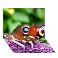 Peacock Butterfly Love Bottom 3d Greeting Card (7x5)