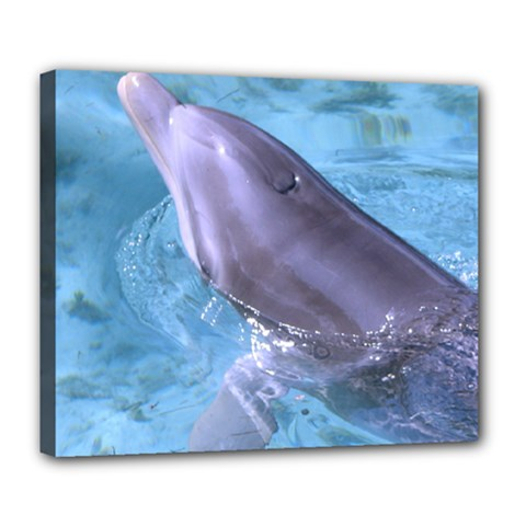 Dolphin 2 Deluxe Canvas 24  X 20   by trendistuff