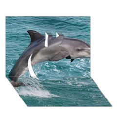 Dolphin Apple 3d Greeting Card (7x5)