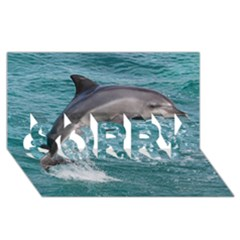 Dolphin Sorry 3d Greeting Card (8x4)