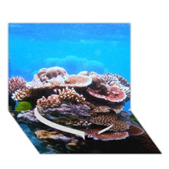 Coral Outcrop 2 Heart Bottom 3d Greeting Card (7x5)