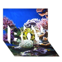 Coral Outcrop 1 Boy 3d Greeting Card (7x5)
