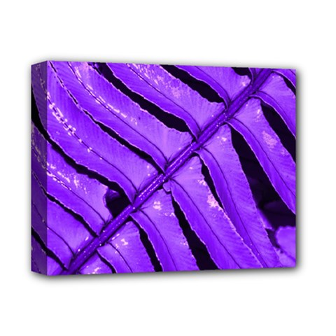Purple Fern Deluxe Canvas 14  X 11  by timelessartoncanvas