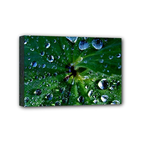 Morning Dew Mini Canvas 6  X 4  by Costasonlineshop