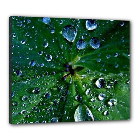 Morning Dew Canvas 24  X 20