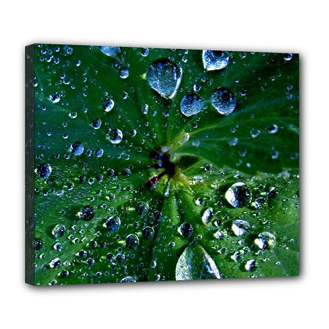 Morning Dew Deluxe Canvas 24  X 20   by Costasonlineshop