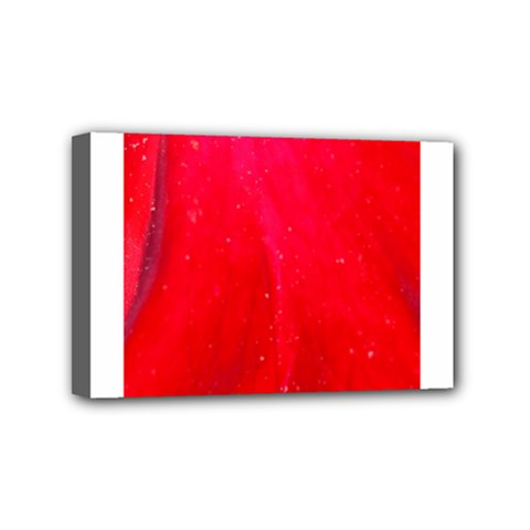 Red And Beautiful Mini Canvas 6  X 4  by timelessartoncanvas