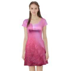 Floating Pink Short Sleeve Skater Dress by timelessartoncanvas