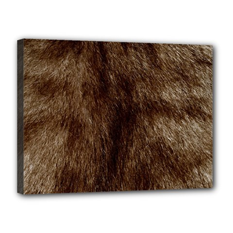 Silber Tiger Fur Canvas 16  X 12  by timelessartoncanvas