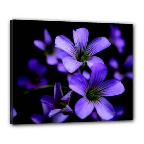 Springtime Flower Design Canvas 20  X 16  by timelessartoncanvas