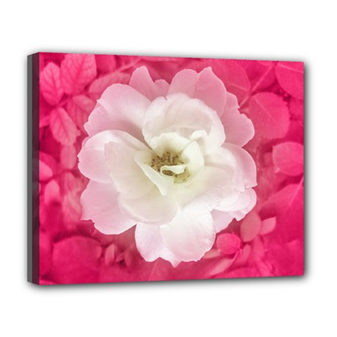 White Rose Deluxe Canvas 20  X 16   by dflcprints