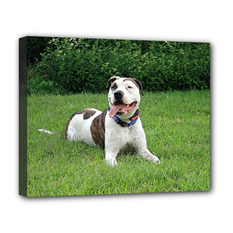 Pit Bull T Bone Deluxe Canvas 20  X 16   by ButThePitBull