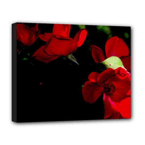 Roses 3 Deluxe Canvas 20  X 16   by timelessartoncanvas