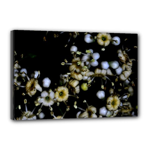 Little White Flowers 2 Canvas 18  X 12  by timelessartoncanvas