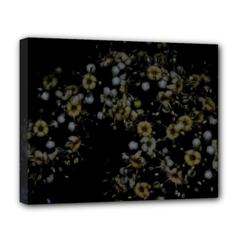 Little White Flowers 3 Deluxe Canvas 20  X 16   by timelessartoncanvas