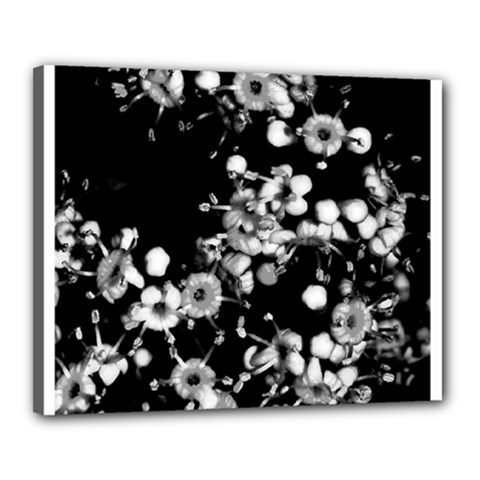 Little Black And White Flowers Canvas 20  X 16  by timelessartoncanvas