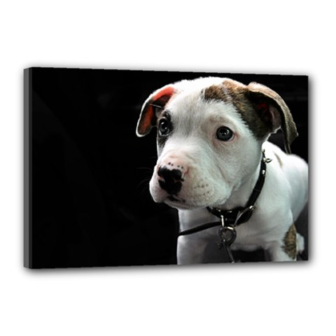 Pit Bull T Bone Puppy Canvas 18  X 12  by ButThePitBull