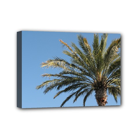 Tropical Palm Tree  Mini Canvas 7  X 5  by BrightVibesDesign