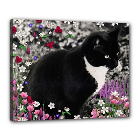 Freckles In Flowers Ii, Black White Tux Cat Canvas 20  X 16  by DianeClancy
