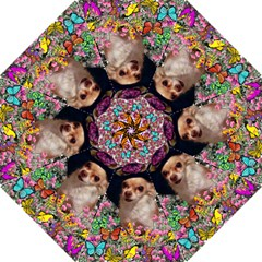 Chi Chi In Butterflies, Chihuahua Dog In Cute Hat Folding Umbrellas by DianeClancy