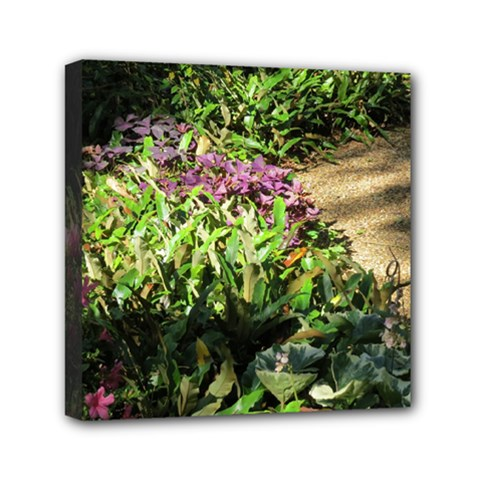 Shadowed Ground Cover Mini Canvas 6  X 6  by ArtsFolly