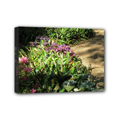 Shadowed Ground Cover Mini Canvas 7  X 5  by ArtsFolly