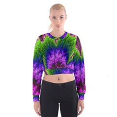 Amazing Special Fractal 25c Women s Cropped Sweatshirt by Fractalworld