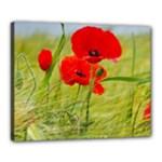 Poppy Canvas 20  x 16  (Framed)