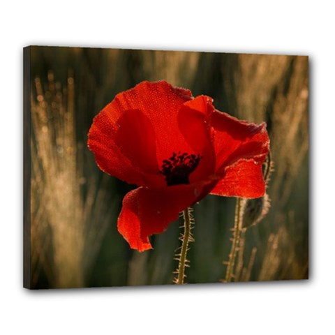 Poppy Canvas 20  X 16  (framed)