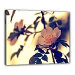 White Roses Canvas 20  x 16  (Framed)