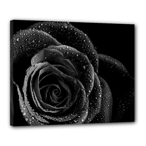 Black Rose Canvas 20  X 16  (framed) by Fadi2010