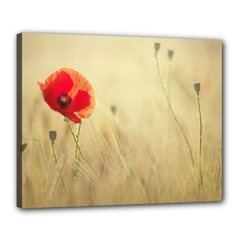 Red Poppies Canvas 20  X 16  (framed)