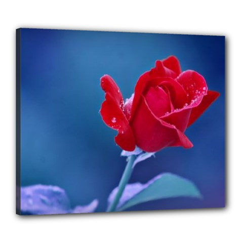 Red Rose Canvas 24  X 20  (framed)
